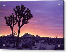 Joshua Tree Sunrise Acrylic Print by Eric Foltz