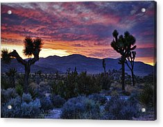Joshua Tree Sunset Acrylic Print by Wendy White