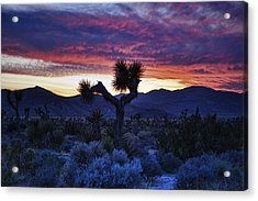 Joshua Tree Sunset_2 Acrylic Print by Wendy White