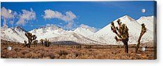 Joshua Trees In The Sierra Nevada Acrylic Print by Panoramic Images