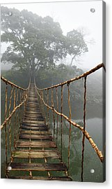 Jungle Journey 2 Acrylic Print by Skip Nall