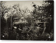 Junkyard Dogs IIi Acrylic Print by Off The Beaten Path Photography - Andrew Alexander