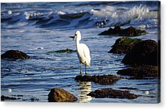 Just A Snack Acrylic Print by John Pierpont
