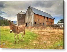 Just Another Day On The Farm Acrylic Print by Donna Kennedy