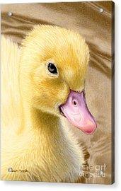 Just Ducky Acrylic Print by Sarah Batalka