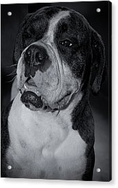 Just Handsome II Acrylic Print by DigiArt Diaries by Vicky B Fuller