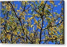 Kaleidoscope Acrylic Print by Corinne Rhode