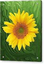 Kansas Sunflower Acrylic Print by Jim  Darnall