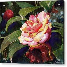 Karma Camellia Acrylic Print by Andrew King