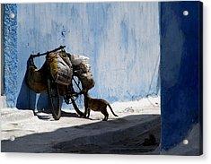 Kasbah Cat Acrylic Print by Peter Verdnik