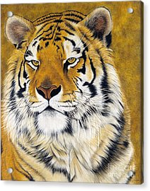 Kato Acrylic Print by Lawrence Supino