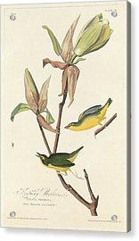 Kentucky Warbler Acrylic Print by John James Audubon