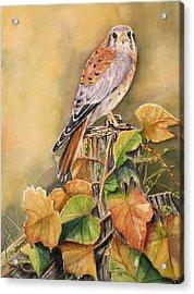 Kestrel In Fall Acrylic Print by Patricia Pushaw