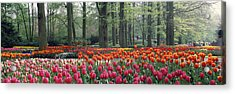 Keukenhof Garden, Lisse, The Netherlands Acrylic Print by Panoramic Images