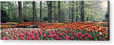 Keukenhof Garden, Lisse, The Netherlands Acrylic Print by Panoramic Images