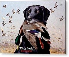 King Buck    1959 Federal Duck Stamp Artwork Acrylic Print by Maynard Reece