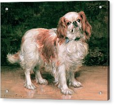 King Charles Spaniel Acrylic Print by George Sheridan Knowles