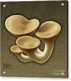 King Oyster Mushrooms Acrylic Print by Marshall Robinson