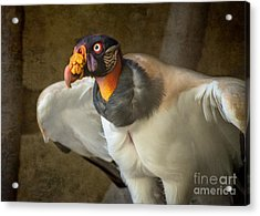 King Vulture Acrylic Print by Jamie Pham