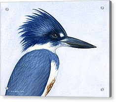 Kingfisher Portrait Acrylic Print by Charles Harden