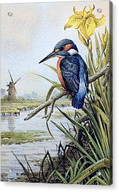 Kingfisher With Flag Iris And Windmill Acrylic Print by Carl Donner