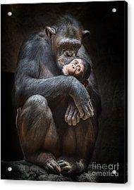 Kiss From Mom Acrylic Print by Jamie Pham