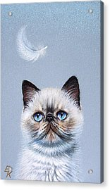 Kitten And Feather  Acrylic Print by Elena Kolotusha