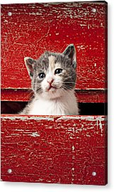 Kitten In Red Drawer Acrylic Print by Garry Gay