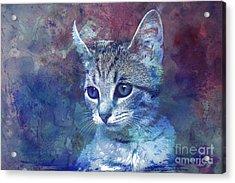 Kitten Acrylic Print by Jutta Maria Pusl