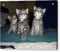 Kittens  Acrylic Print by Joyce Woodhouse