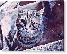 Kitty Cat Acrylic Print by Jutta Maria Pusl