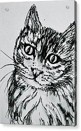 Kitty Cat Acrylic Print by Pete Maier