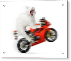 Kitty On A Motorcycle Doing A Wheelie Acrylic Print by Oleksiy Maksymenko