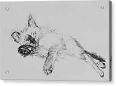 Kitty Acrylic Print by Vincent Alexander Booth