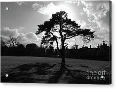 Knole Park Shadows 1 Acrylic Print by James Brunker