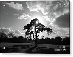 Knole Park Shadows 2 Acrylic Print by James Brunker