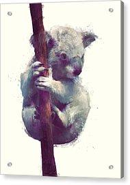 Koala Acrylic Print by Amy Hamilton