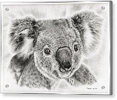 Koala Newport Bridge Gloria Acrylic Print by Remrov Vormer