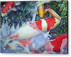 Koi Underwater Play Acrylic Print by June Conte  Pryor