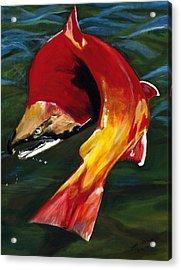 Kokanee Acrylic Print by Sara Stevenson