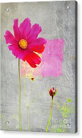 L Elancee - J176a Acrylic Print by Variance Collections