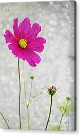 L Elancee Acrylic Print by Variance Collections