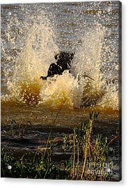 Lab At Work Acrylic Print by Robert Frederick
