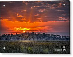 Labor Of Love Acrylic Print by Marvin Spates