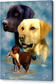 Labrador Retrievers Acrylic Print by Becky Herrera