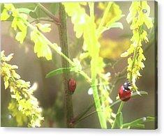 Ladybug Ladybug Acrylic Print by Toni Hopper