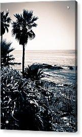 Laguna Beach California Black And White Acrylic Print by Paul Velgos