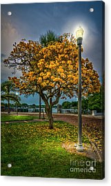 Lamp And Tree Acrylic Print by Marvin Spates