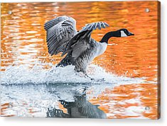 Landing Acrylic Print by Parker Cunningham