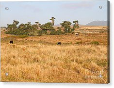 Landscape With Cows Grazing In The Field . 7d9957 Acrylic Print by Wingsdomain Art and Photography